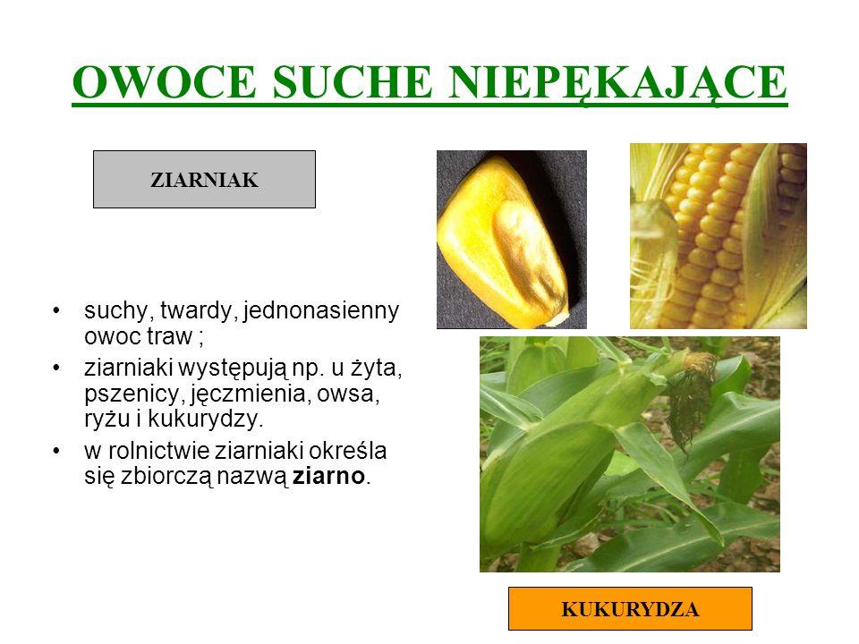 OWOCE SUCHE NIEPĘKAJĄCE suchy, twardy, jednonasienny owoc traw ; ziarniaki występują np. u żyta, pszenicy, jęczmienia, owsa, ryżu i kukurydzy. w rolni