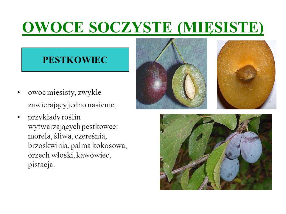 OWOCE SOCZYSTE (MIĘSISTE) owoc mięsisty, zwykle zawierający jedno nasienie; przykłady roślin wytwarzających pestkowce: morela, śliwa, czereśnia, brzos