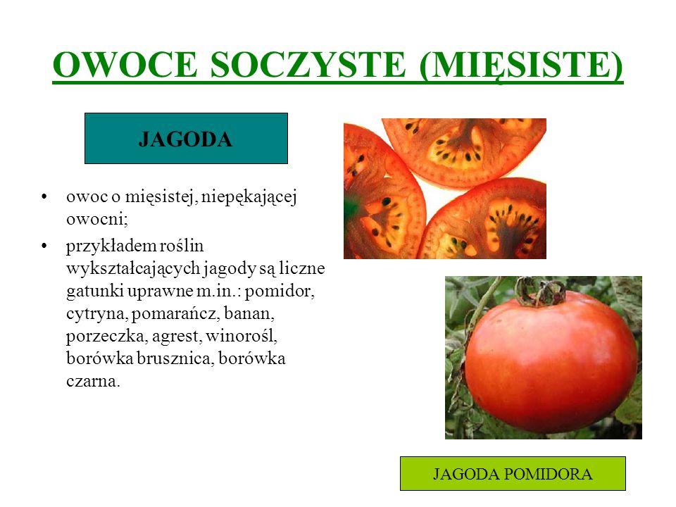 OWOCE SOCZYSTE (MIĘSISTE) owoc o mięsistej, niepękającej owocni; przykładem roślin wykształcających jagody są liczne gatunki uprawne m.in.: pomidor, c