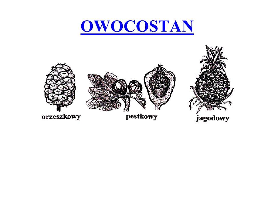 OWOCOSTAN