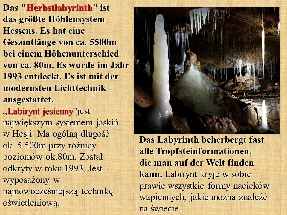 Das Labyrinth beherbergt fast alle Tropfsteinformationen, die man auf der Welt finden kann. Labirynt kryje w sobie prawie wszystkie formy nacieków wap