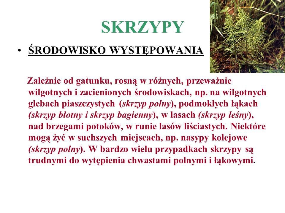 SKRZYPY ŚRODOWISKO WYSTĘPOWANIA Zależnie od gatunku, rosną w różnych, przeważnie wilgotnych i zacienionych środowiskach, np. na wilgotnych glebach pia