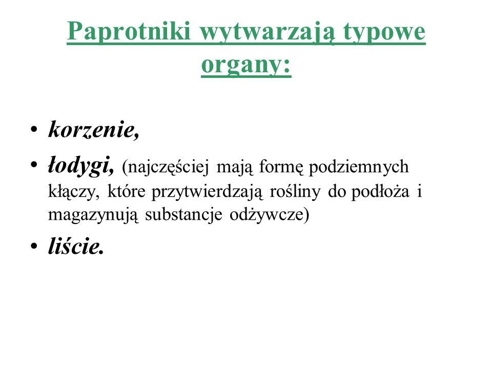 Paprotniki wytwarzają typowe organy: korzenie, łodygi, (najczęściej mają formę podziemnych kłączy, które przytwierdzają rośliny do podłoża i magazynuj