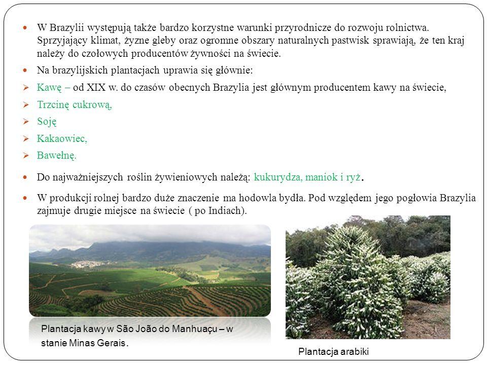 W Brazylii występują także bardzo korzystne warunki przyrodnicze do rozwoju rolnictwa. Sprzyjający klimat, żyzne gleby oraz ogromne obszary naturalnyc