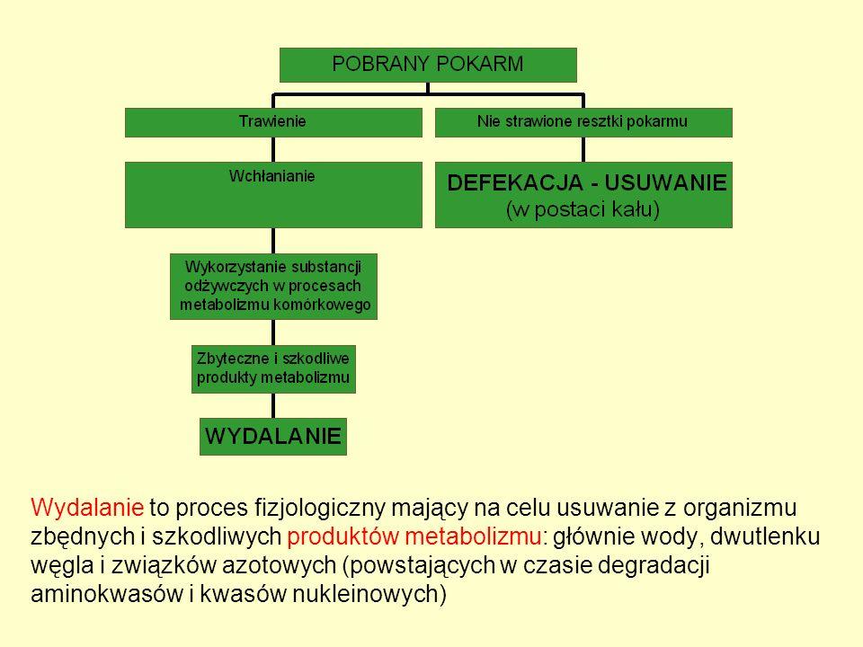 Wydalanie to proces fizjologiczny mający na celu usuwanie z organizmu zbędnych i szkodliwych produktów metabolizmu: głównie wody, dwutlenku węgla i zw