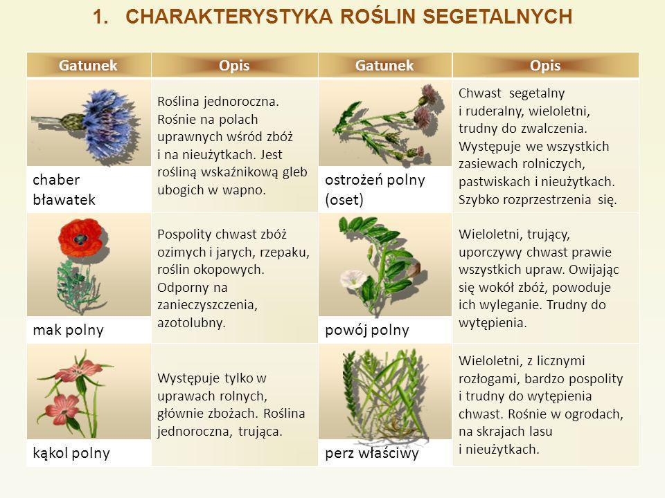 1.CHARAKTERYSTYKA ROŚLIN SEGETALNYCH GatunekOpisGatunekOpis Roślina jednoroczna. Rośnie na polach uprawnych wśród zbóż i na nieużytkach. Jest rośliną