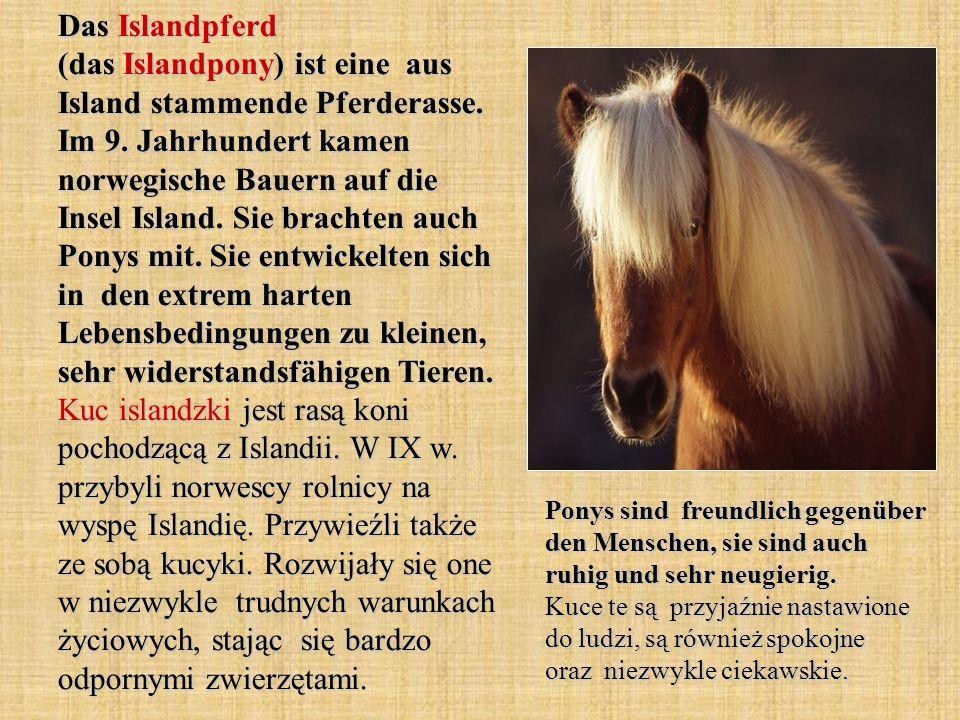 Das Islandpferd (das Islandpony) ist eine aus Island stammende Pferderasse.