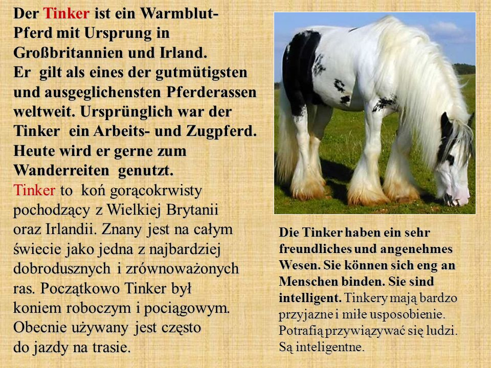 Der Tinker ist ein Warmblut- Pferd mit Ursprung in Großbritannien und Irland.