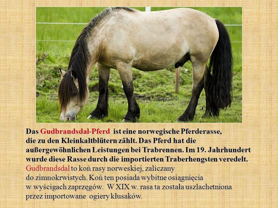 Das Gudbrandsdal-Pferd ist eine norwegische Pferderasse, die zu den Kleinkaltblütern zählt.