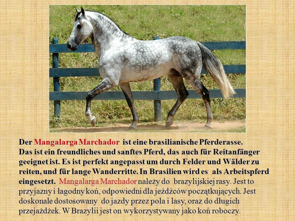 Der Mangalarga Marchador ist eine brasilianische Pferderasse.