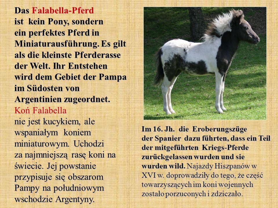 Das Falabella-Pferd ist kein Pony, sondern ein perfektes Pferd in Miniaturausführung.