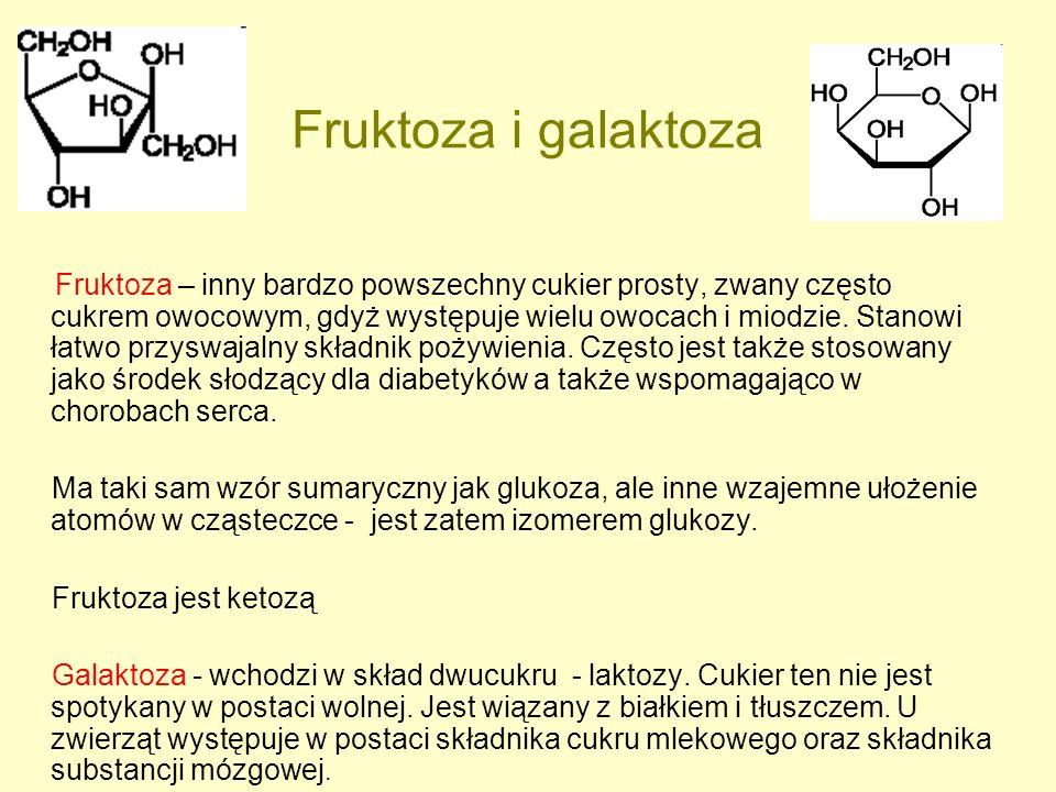 Fruktoza i galaktoza Fruktoza – inny bardzo powszechny cukier prosty, zwany często cukrem owocowym, gdyż występuje wielu owocach i miodzie. Stanowi ła