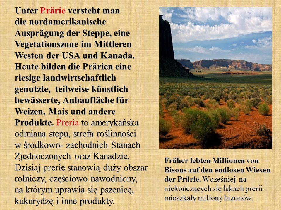 Unter Prärie versteht man die nordamerikanische Ausprägung der Steppe, eine Vegetationszone im Mittleren Westen der USA und Kanada. Heute bilden die P