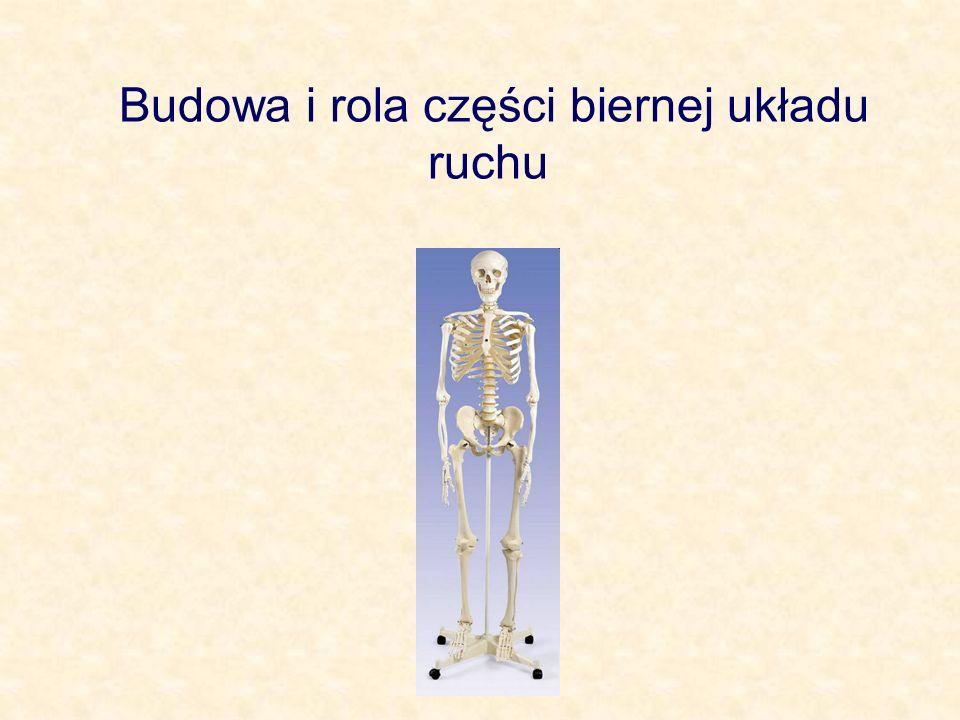 Budowa stawu 1 – więzadło 2 – torebka stawowa, warstwa włóknista – błona, która zamyka od zewnątrz jamę stawową, zapewnia stabilność i odgranicza staw od otoczenia 3 – torebka stawowa, warstwa maziowa – produkuje maź, która nawilża chrząstki stawowe zmniejszając tarcie 4 – powierzchnia stawowa kości 5 – chrząstka stawowa – pokrywa powierzchnie stykających się kości, zapobiega ich ścieraniu, ułatwia poślizg 6 – jama stawowa – przestrzeń wypełniona mazią