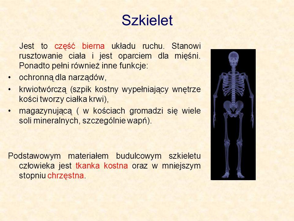 Szkielet człowieka Szkielet człowieka można podzielić na dwie części.