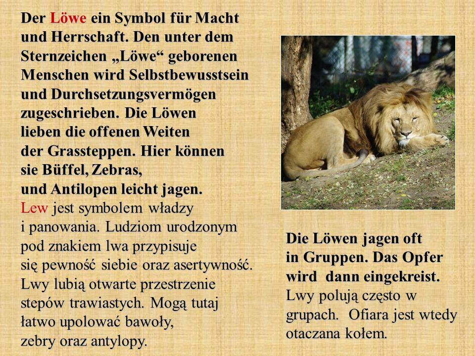 Der Löwe ein Symbol für Macht und Herrschaft. Den unter dem Sternzeichen Löwe geborenen Menschen wird Selbstbewusstsein und Durchsetzungsvermögen zuge