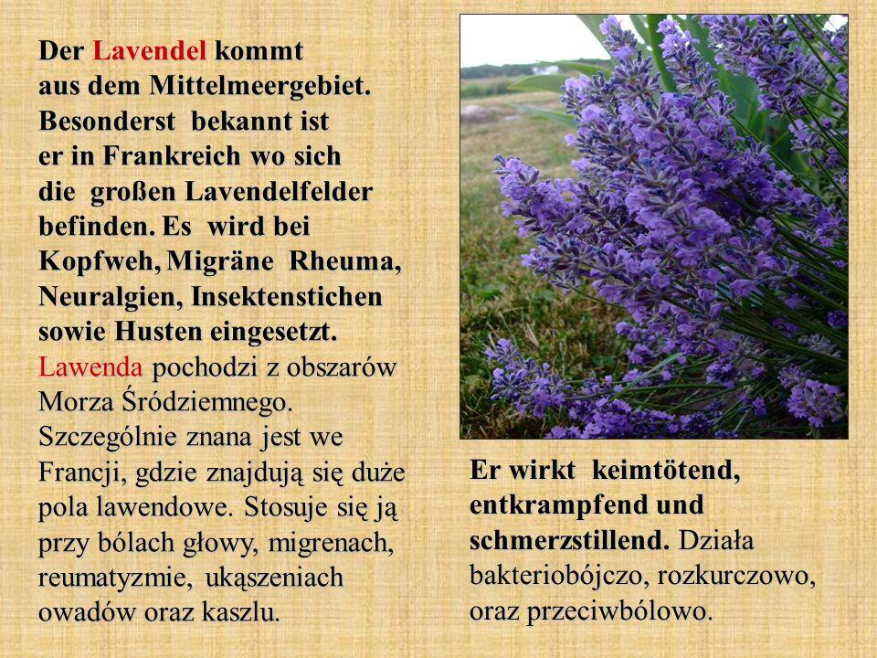 Der Lavendel kommt aus dem Mittelmeergebiet. Besonderst bekannt ist er in Frankreich wo sich die großen Lavendelfelder befinden. Es wird bei Kopfweh,