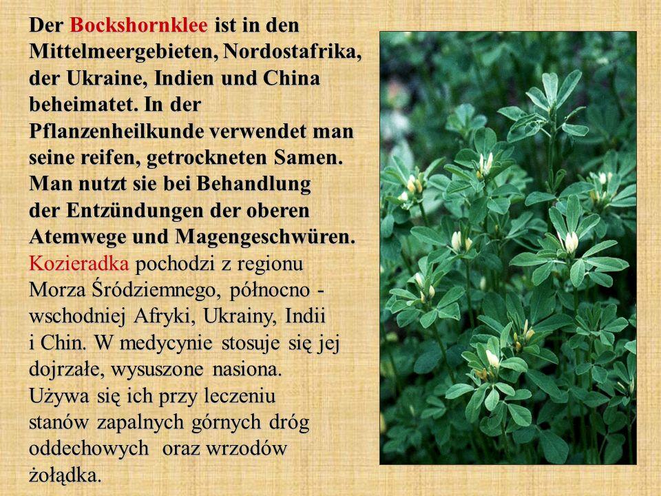 Der Bockshornklee ist in den Mittelmeergebieten, Nordostafrika, der Ukraine, Indien und China beheimatet. In der Pflanzenheilkunde verwendet man seine