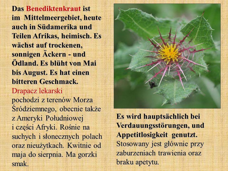 Das Benediktenkraut ist im Mittelmeergebiet, heute auch in Südamerika und Teilen Afrikas, heimisch. Es wächst auf trockenen, sonnigen Äckern - und Ödl