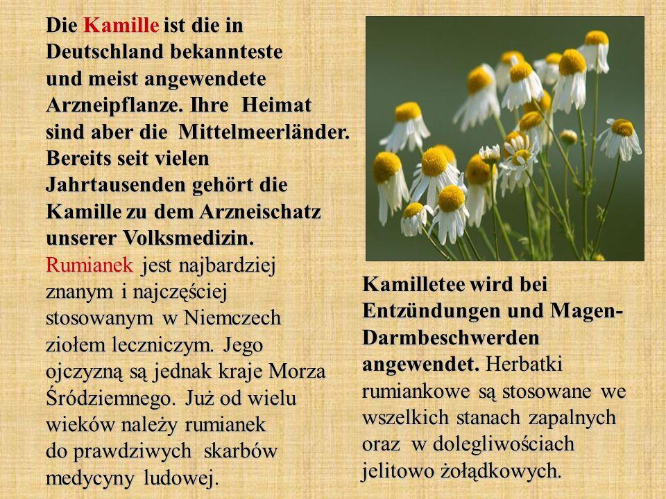 Die Kamille ist die in Deutschland bekannteste und meist angewendete Arzneipflanze. Ihre Heimat sind aber die Mittelmeerländer. Bereits seit vielen Ja