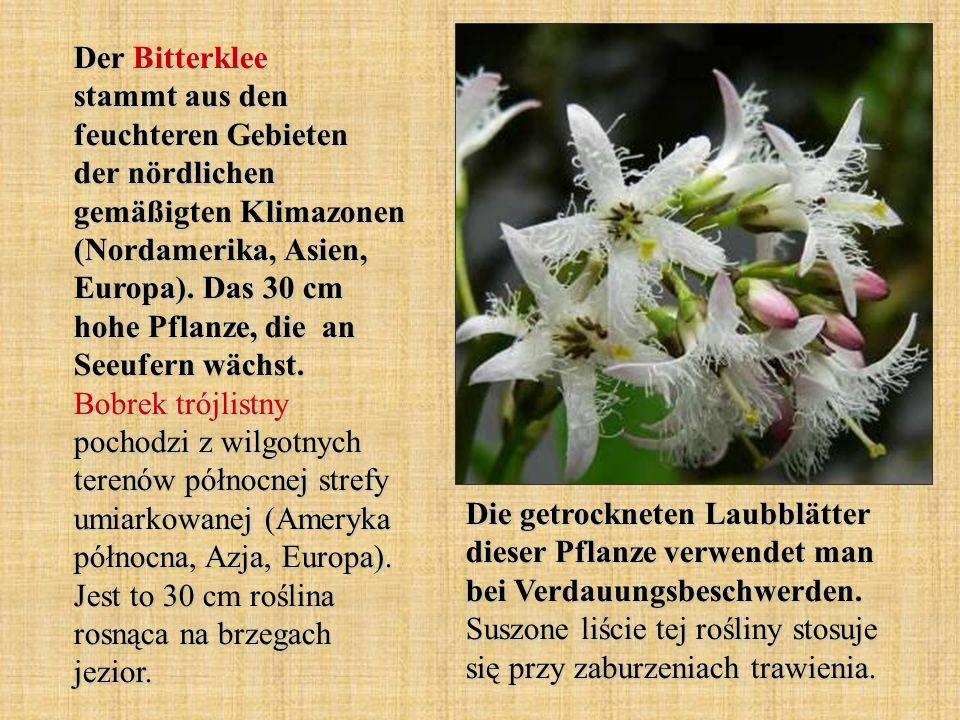 Der Bitterklee stammt aus den feuchteren Gebieten der nördlichen gemäßigten Klimazonen (Nordamerika, Asien, Europa). Das 30 cm hohe Pflanze, die an Se