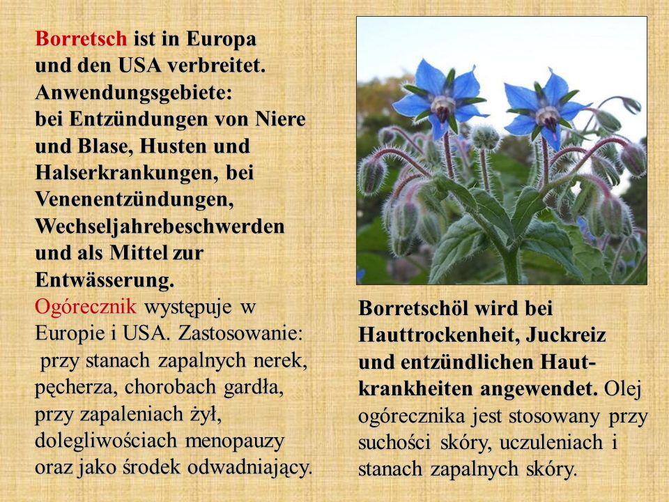 Borretsch ist in Europa und den USA verbreitet. Anwendungsgebiete: bei Entzündungen von Niere und Blase, Husten und Halserkrankungen, bei Venenentzünd