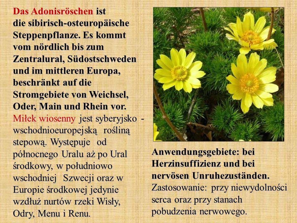 Das Adonisröschen ist die sibirisch-osteuropäische Steppenpflanze. Es kommt vom nördlich bis zum Zentralural, Südostschweden und im mittleren Europa,