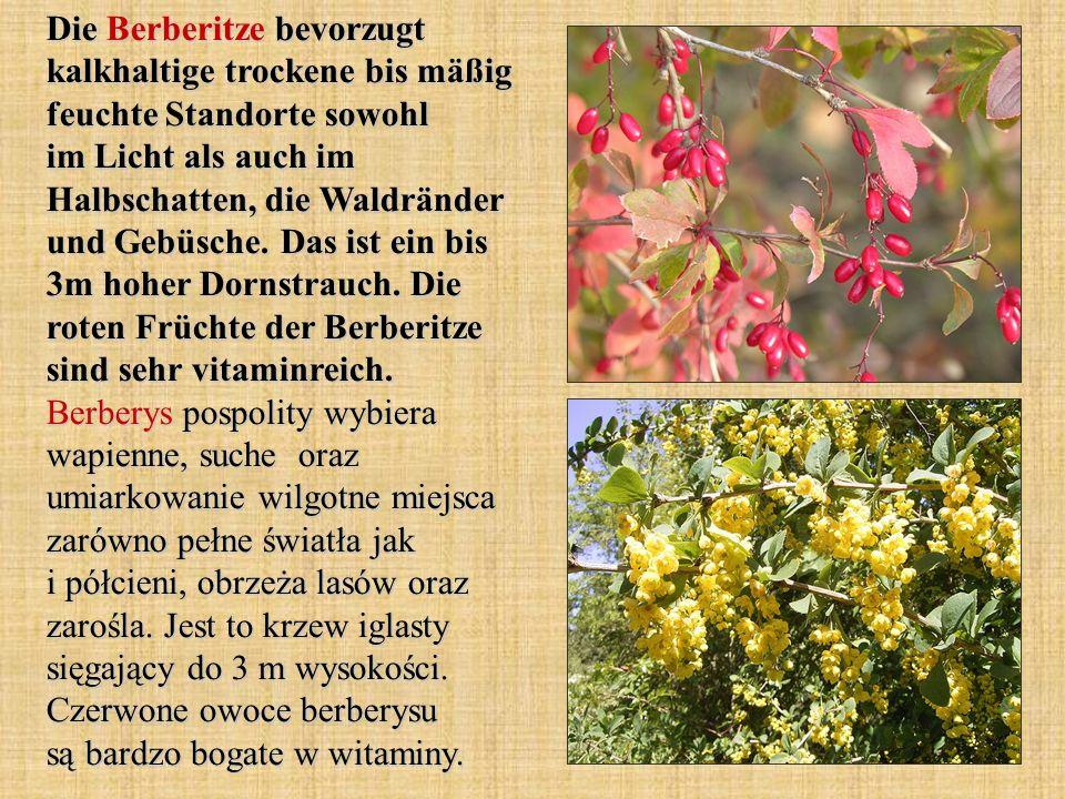 Die Berberitze bevorzugt kalkhaltige trockene bis mäßig feuchte Standorte sowohl im Licht als auch im Halbschatten, die Waldränder und Gebüsche. Das i