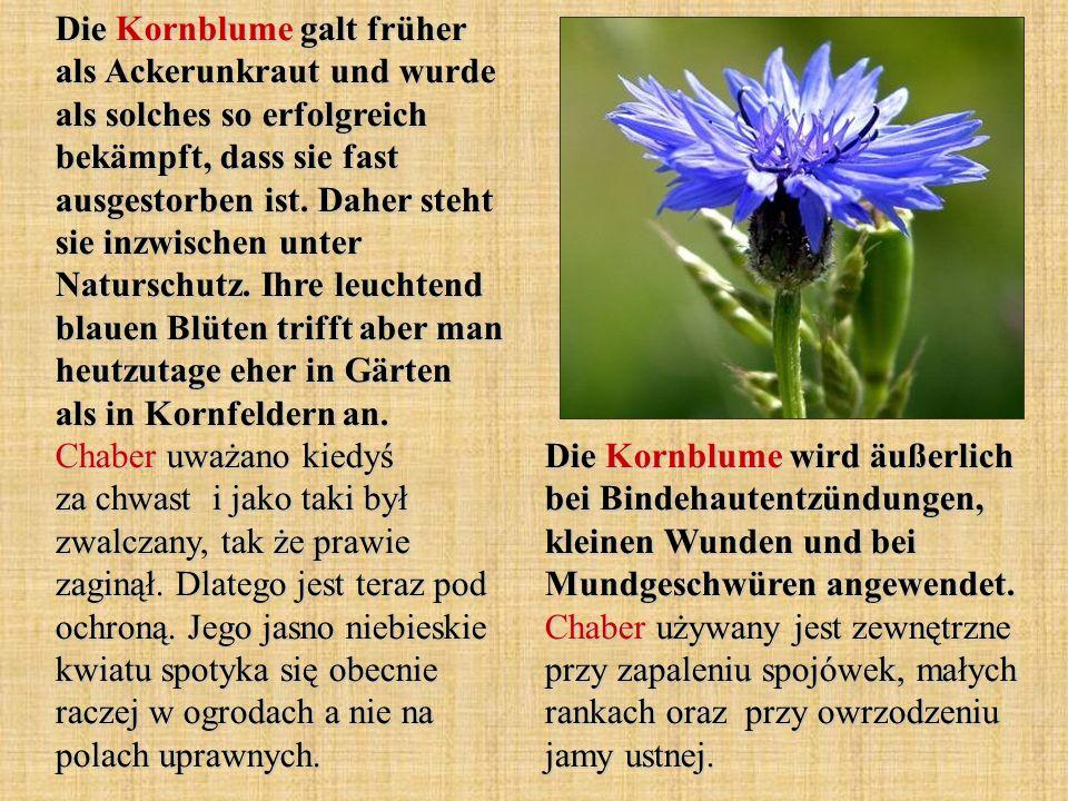 Die Kornblume galt früher als Ackerunkraut und wurde als solches so erfolgreich bekämpft, dass sie fast ausgestorben ist. Daher steht sie inzwischen u