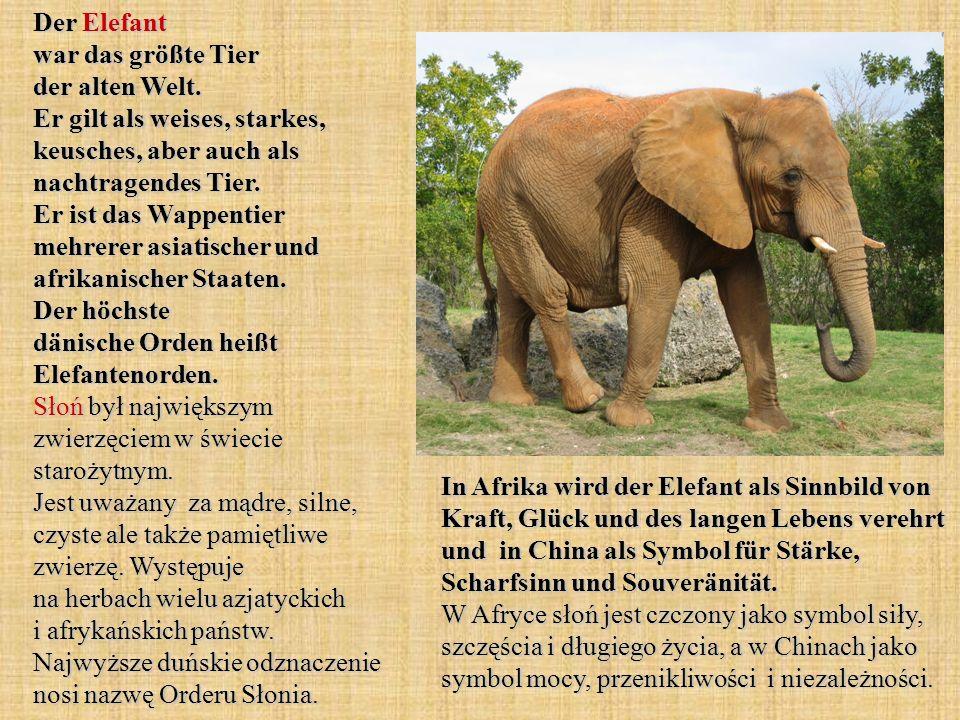 Der Elefant war das größte Tier der alten Welt. Er gilt als weises, starkes, keusches, aber auch als nachtragendes Tier. Er ist das Wappentier mehrere