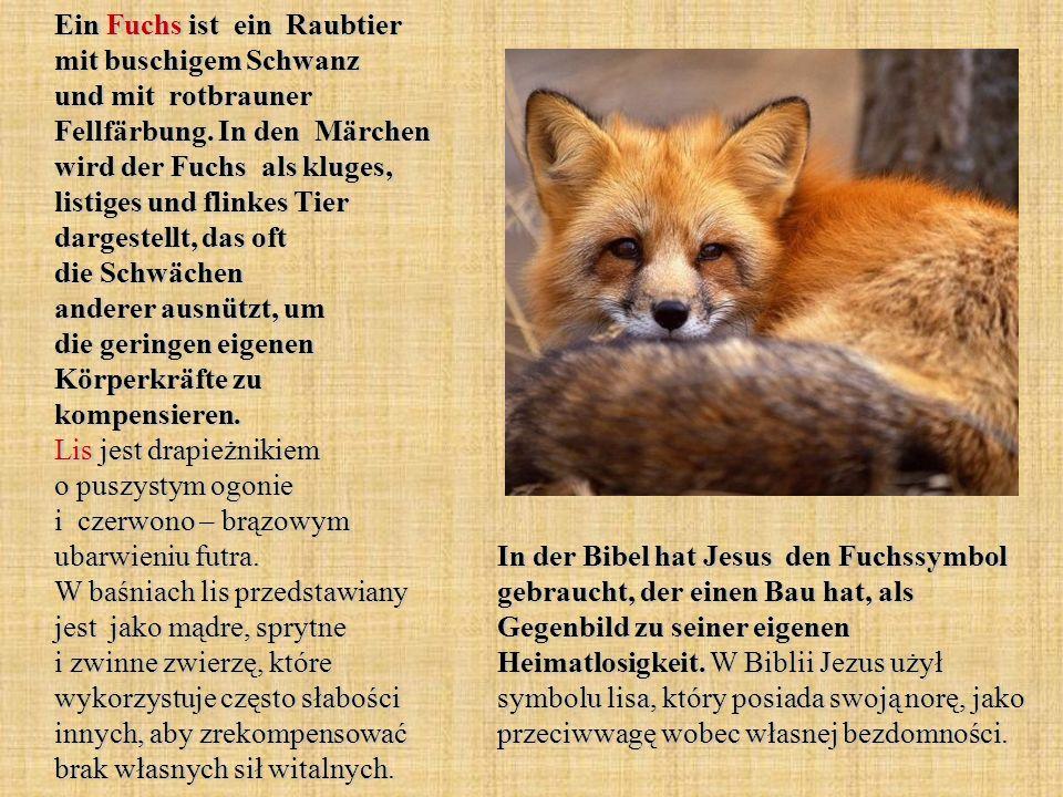 Ein Fuchs ist ein Raubtier mit buschigem Schwanz und mit rotbrauner Fellfärbung. In den Märchen wird der Fuchs als kluges, listiges und flinkes Tier d