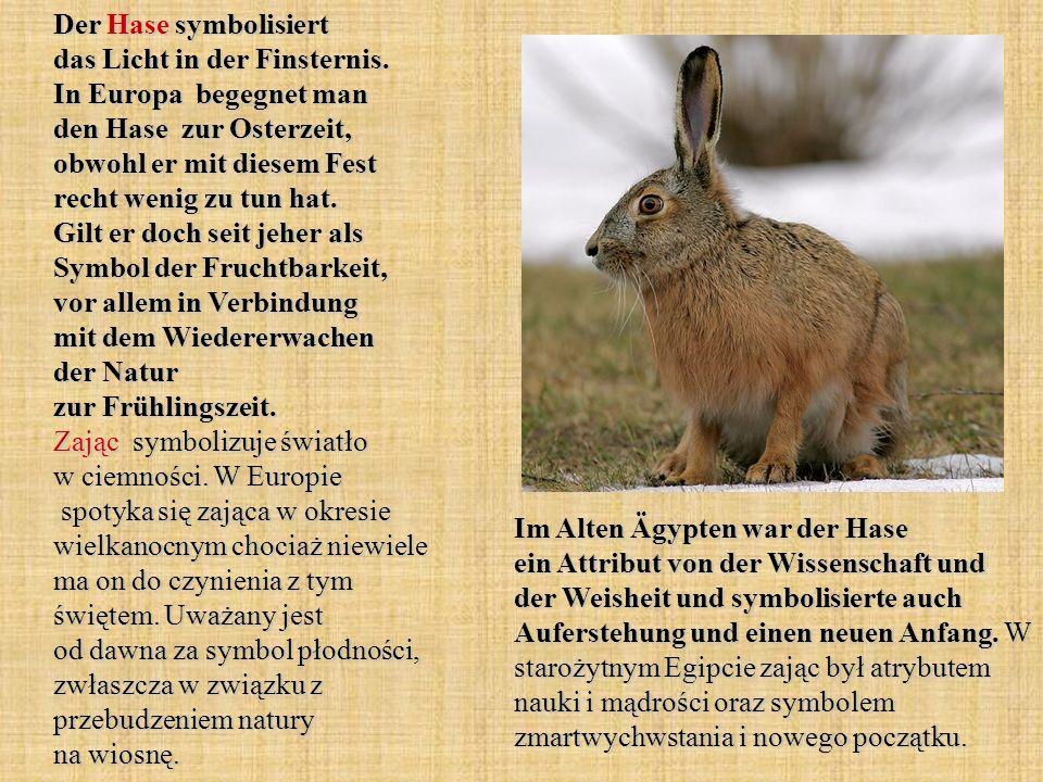 Der Hase symbolisiert das Licht in der Finsternis. In Europa begegnet man den Hase zur Osterzeit, obwohl er mit diesem Fest recht wenig zu tun hat. Gi