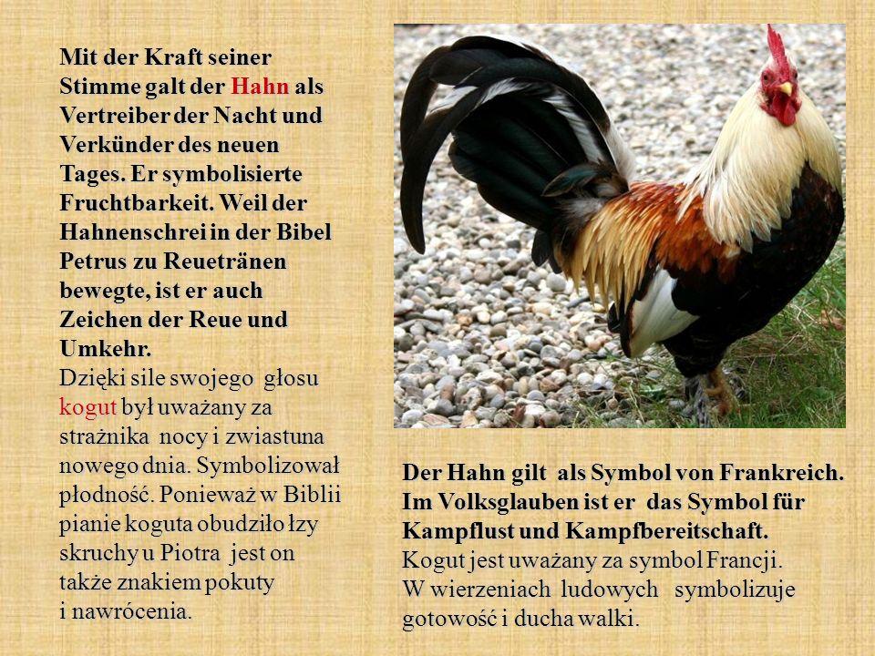 Mit der Kraft seiner Stimme galt der Hahn als Vertreiber der Nacht und Verkünder des neuen Tages. Er symbolisierte Fruchtbarkeit. Weil der Hahnenschre