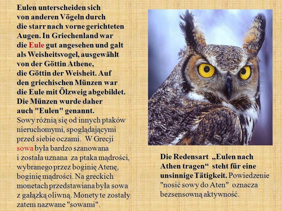 Eulen unterscheiden sich von anderen Vögeln durch die starr nach vorne gerichteten Augen. In Griechenland war die Eule gut angesehen und galt als Weis