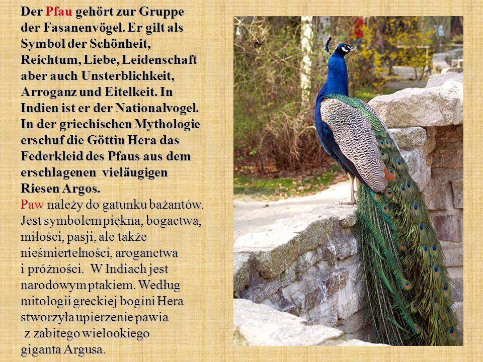 Der Pfau gehört zur Gruppe der Fasanenvögel. Er gilt als Symbol der Schönheit, Reichtum, Liebe, Leidenschaft aber auch Unsterblichkeit, Arroganz und E