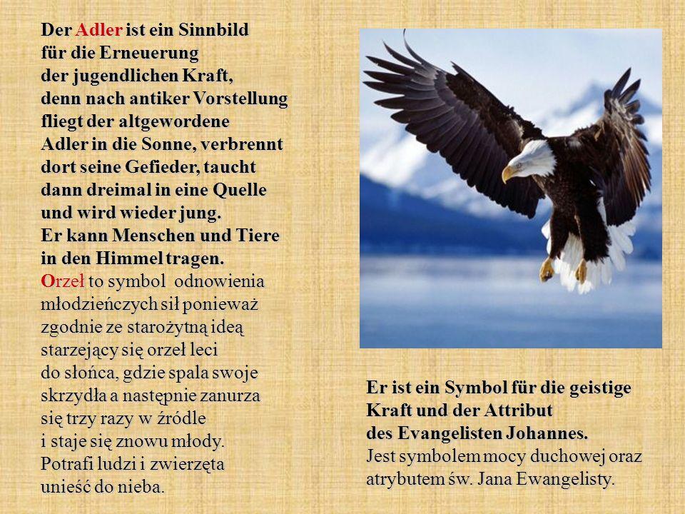 Der Adler ist ein Sinnbild für die Erneuerung der jugendlichen Kraft, denn nach antiker Vorstellung fliegt der altgewordene Adler in die Sonne, verbre