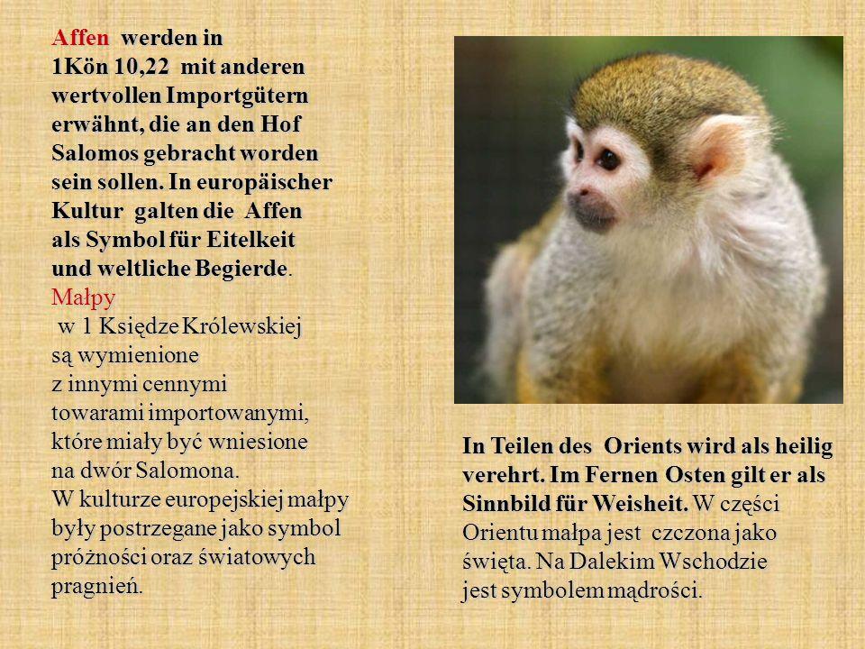 Affen werden in 1Kön 10,22 mit anderen wertvollen Importgütern erwähnt, die an den Hof Salomos gebracht worden sein sollen. In europäischer Kultur gal
