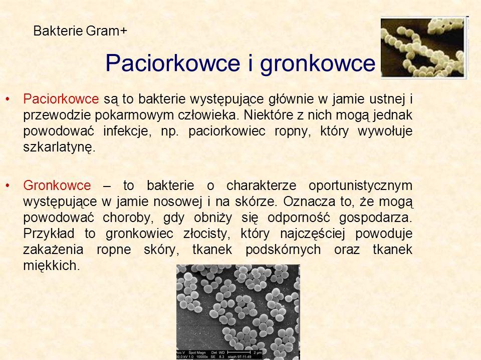 Paciorkowce i gronkowce Paciorkowce są to bakterie występujące głównie w jamie ustnej i przewodzie pokarmowym człowieka. Niektóre z nich mogą jednak p