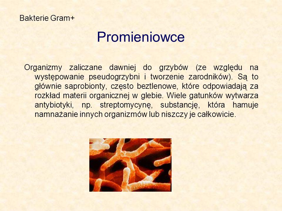 Promieniowce Organizmy zaliczane dawniej do grzybów (ze względu na występowanie pseudogrzybni i tworzenie zarodników). Są to głównie saprobionty, częs
