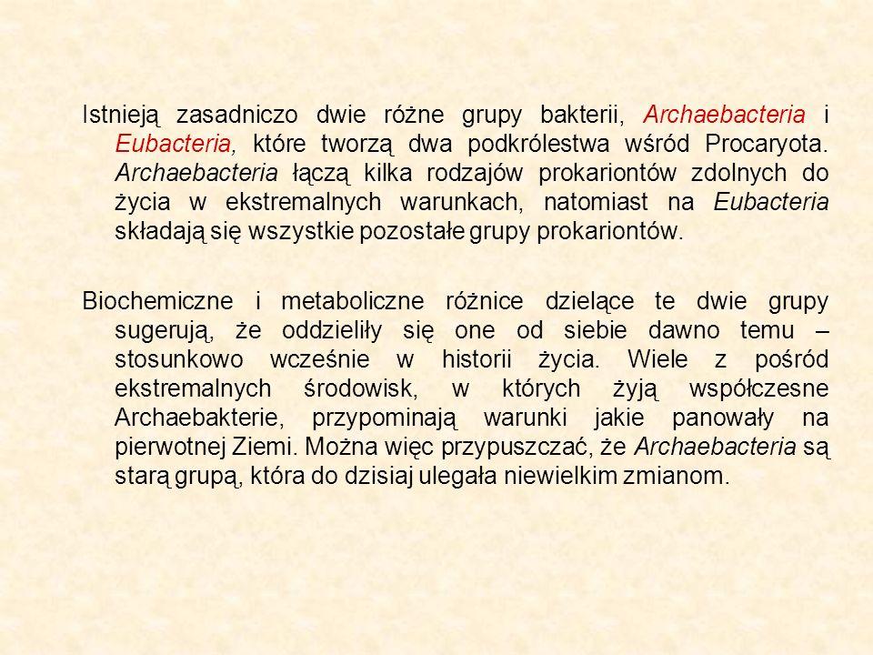 Istnieją zasadniczo dwie różne grupy bakterii, Archaebacteria i Eubacteria, które tworzą dwa podkrólestwa wśród Procaryota. Archaebacteria łączą kilka