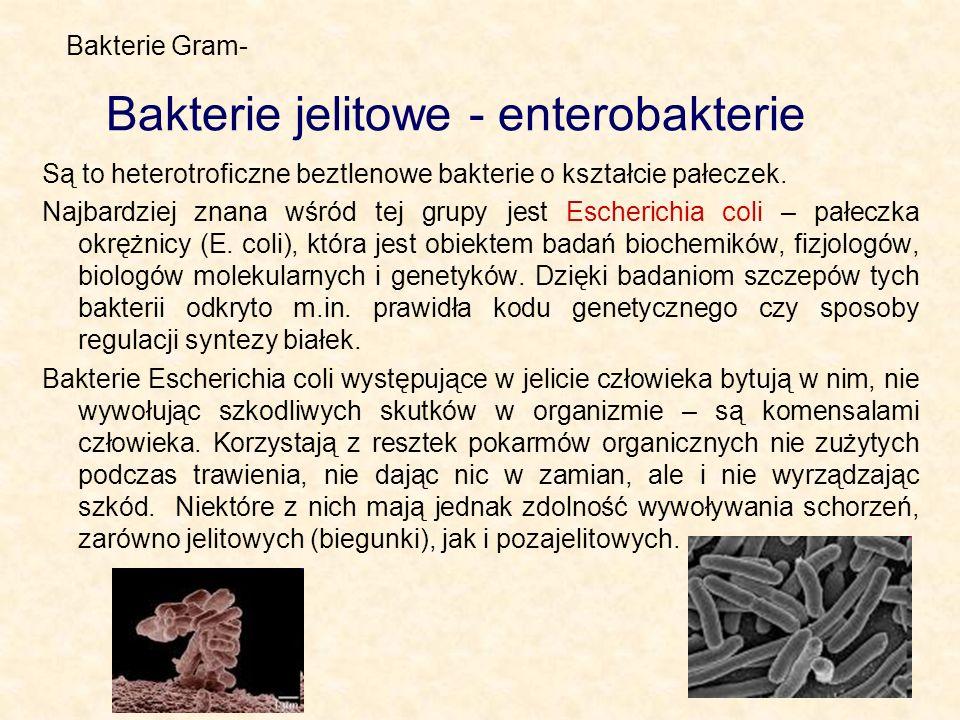 Bakterie jelitowe - enterobakterie Są to heterotroficzne beztlenowe bakterie o kształcie pałeczek. Najbardziej znana wśród tej grupy jest Escherichia