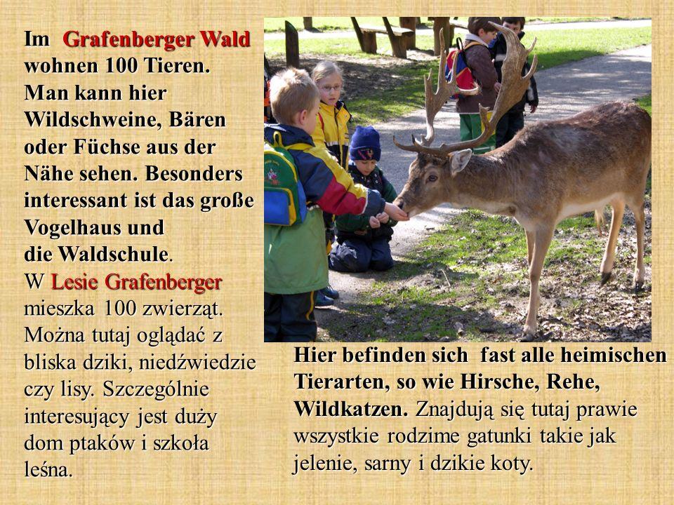 Hier befinden sich fast alle heimischen Tierarten, so wie Hirsche, Rehe, Wildkatzen. Znajdują się tutaj prawie wszystkie rodzime gatunki takie jak jel