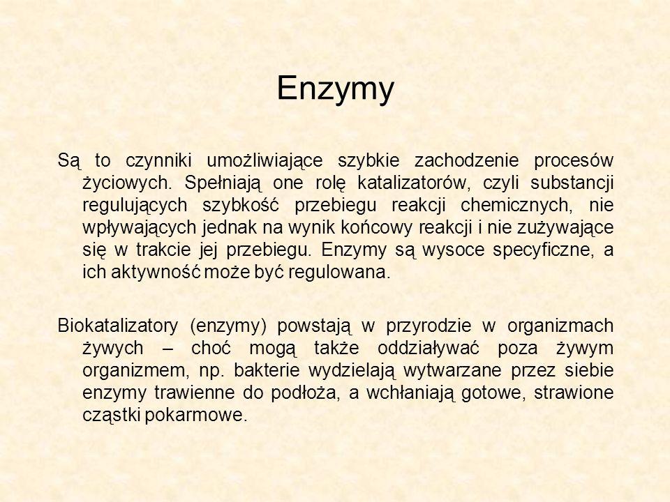 Enzymy Są to czynniki umożliwiające szybkie zachodzenie procesów życiowych. Spełniają one rolę katalizatorów, czyli substancji regulujących szybkość p