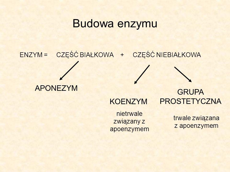 Budowa enzymu ENZYM = CZĘŚĆ BIAŁKOWA + CZĘŚĆ NIEBIAŁKOWA APONEZYM KOENZYM nietrwale związany z apoenzymem GRUPA PROSTETYCZNA trwale związana z apoenzy