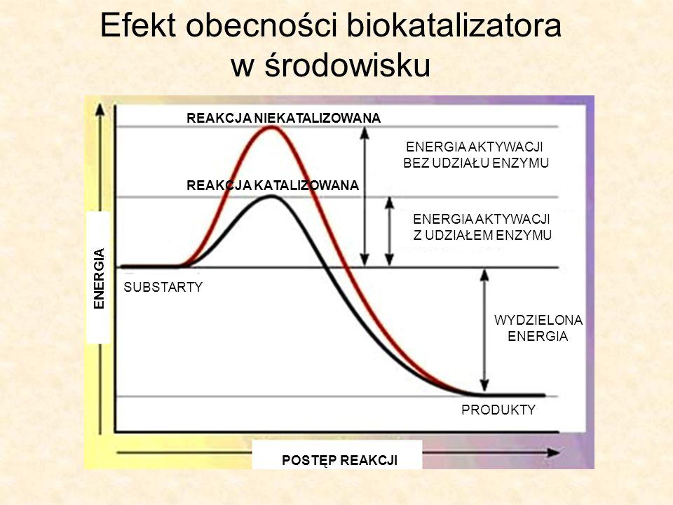 Enzymy Są to czynniki umożliwiające szybkie zachodzenie procesów życiowych.