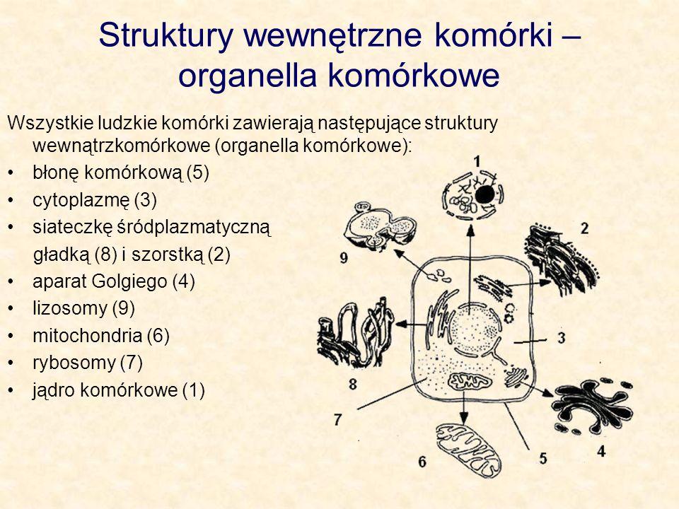 Jądro komórkowe Składa się z otoczki jądrowej (1), kariolimfy (4), chromatyny (6) oraz jąderka (3).