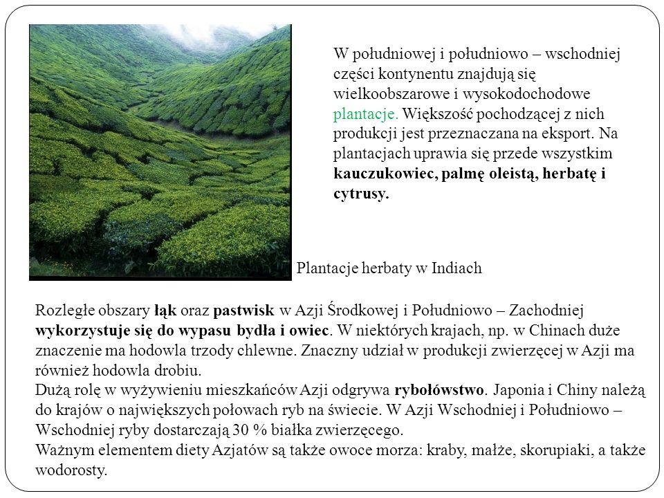 W południowej i południowo – wschodniej części kontynentu znajdują się wielkoobszarowe i wysokodochodowe plantacje. Większość pochodzącej z nich produ