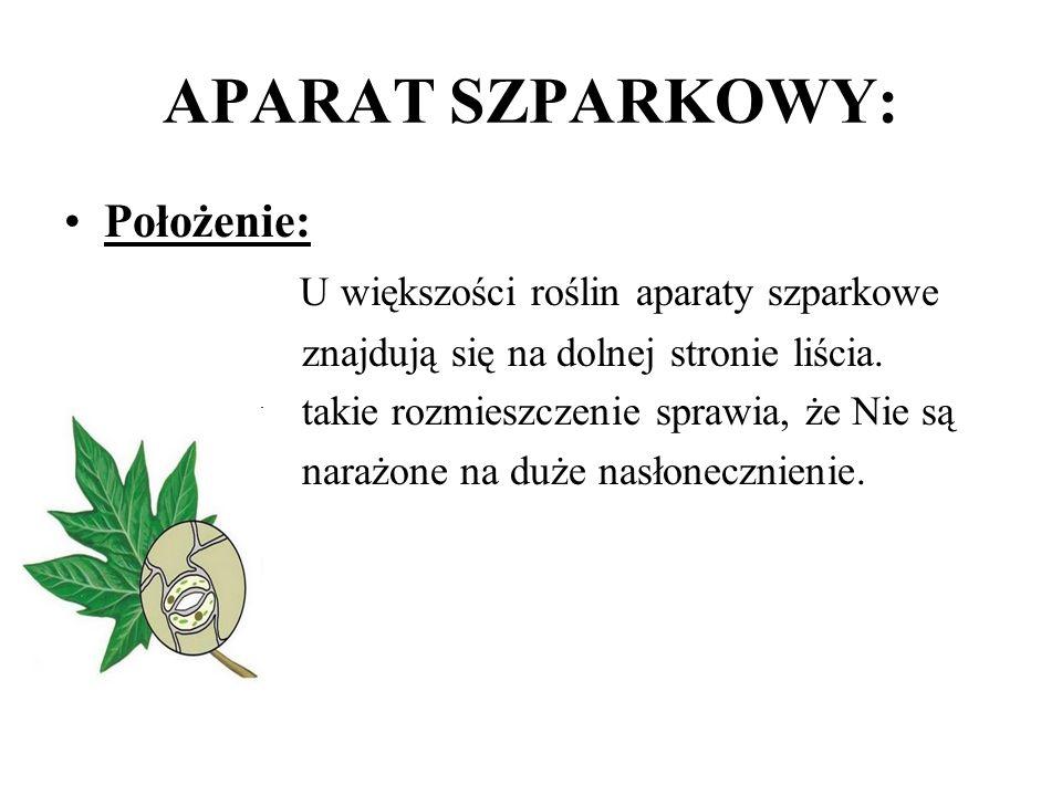 APARAT SZPARKOWY: Położenie: U większości roślin aparaty szparkowe znajdują się na dolnej stronie liścia.