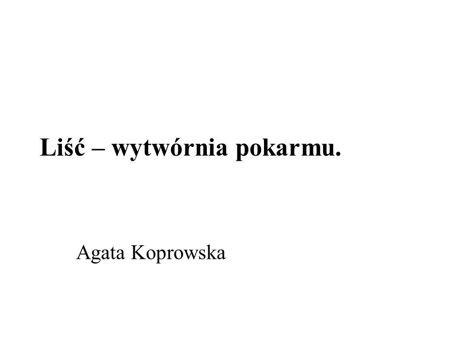 Liść – wytwórnia pokarmu. Agata Koprowska