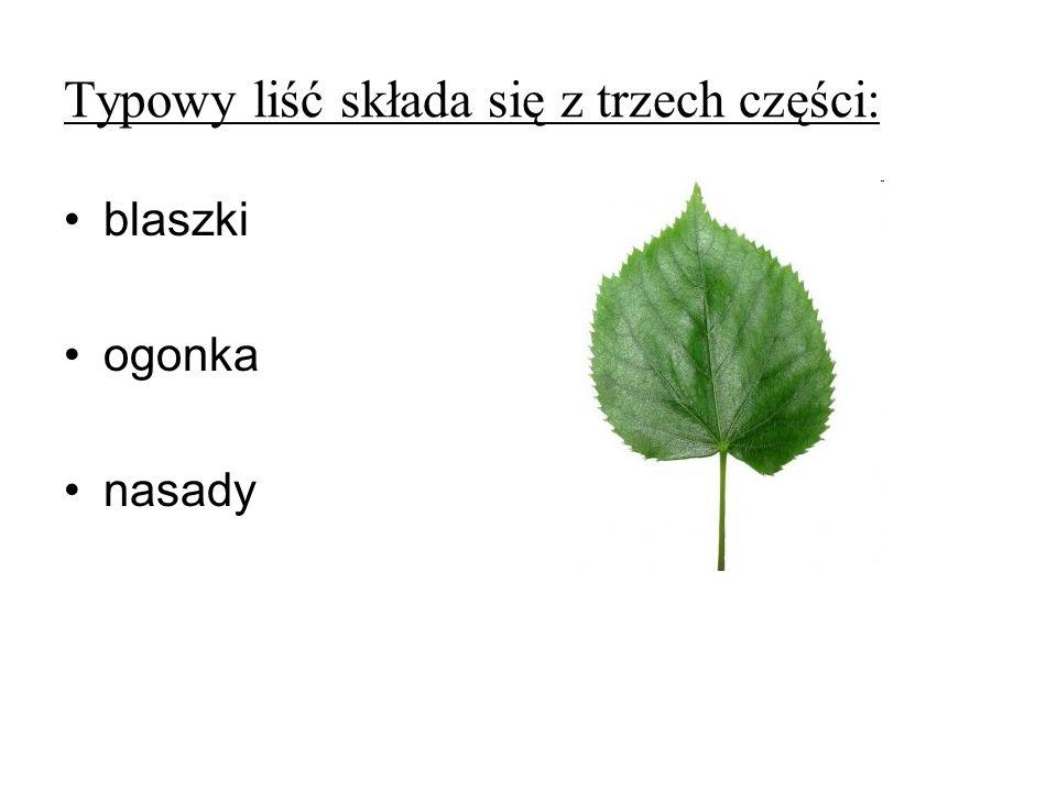 Typowy liść składa się z trzech części: blaszki ogonka nasady